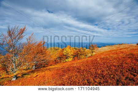 mountain range in the Carpathian Mountains in the autumn season. Fantastic sunset. Ukraine, Europe.