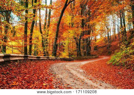 autumn alley. Beauty world Carpathians Ukraine. Europe