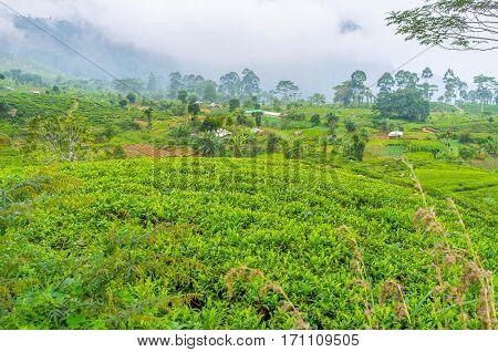 The Green Sri Lanka
