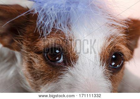 Dog Cute The Look Nice And Cute