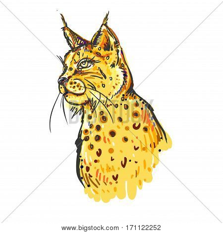 hand drawn color bobcat on white background. Design for poster, print, t-shirt, banners, flyers. vector eps 8.
