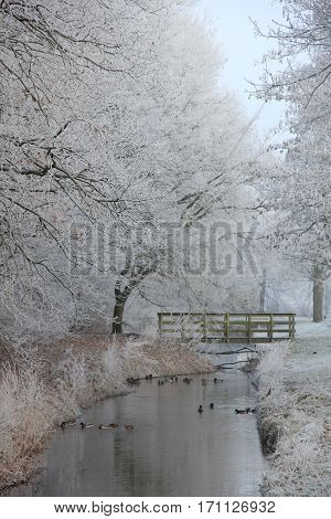 a frozen white winter forest with a ditch