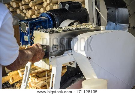 Londrina Brazil - January 14 2017: Man grinding cane to extract the juice from the cane. Sugar cane juice.