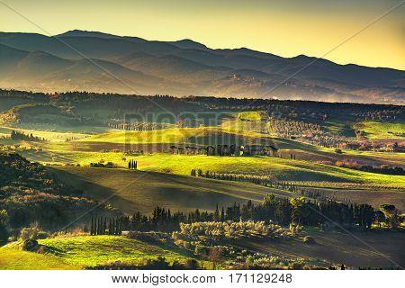 Maremma countryside sunrise foggy landscape rolling hills and trees. Bibbona Tuscany Italy. Europe.