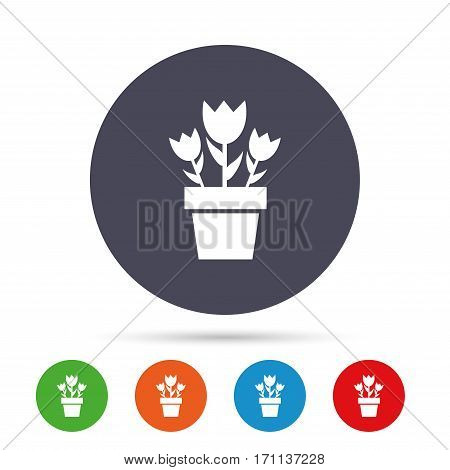 Flowers in pot icon. Bouquet of roses. Macro sign. Round colourful buttons with flat icons. Vector