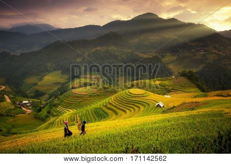 Rice fields on terraced of Mu Cang Chai YenBai Rice fields prepare the harvest at Northwest Vietnam.Vietnam landscapes.