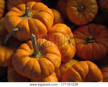 A cluster of very small orange pumpkins