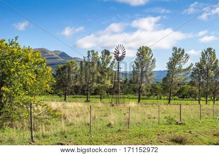 Sunny fenced farm field with wind pump and trees