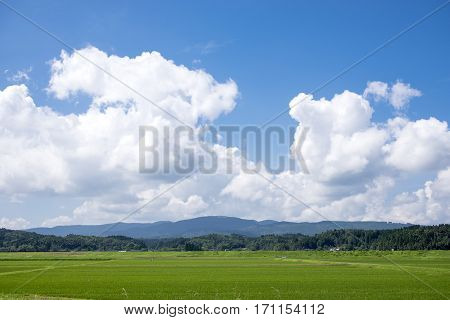 Summer green rice field and blue sky with clouds in Kagoshima