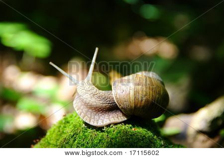 a snail creeps in forest