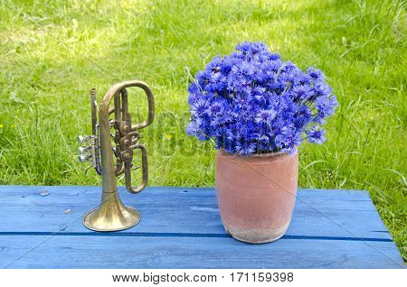 antigue clay pot with cornflowers and brass trumpet on blue wooden table in garden