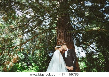 Wedding photo shooting. Bridegroom and bride standing under tree. Holding hand of each other with closed eyes. Outdoor, profile