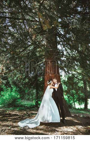 Wedding photo shooting. Bridegroom and bride standing in pine forest. Bride embracing groom. Looking at each other. Outdoor, full body