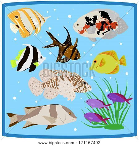 Oceanarium colorful coral reef tropical fish flat icons vector illustration