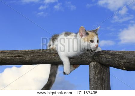 Cute cat having a rest on a log