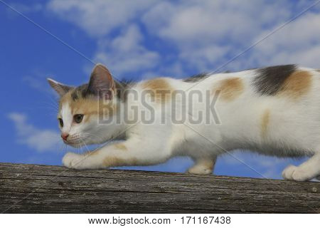 Cute cat walking on a log on sky background