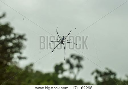 poisonous spider in the sky after the rain in Thailand