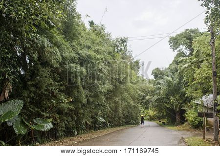 rural road exotic vegetation wet after the rain in the jungle