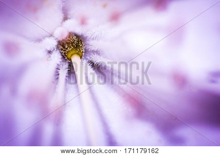 Macro on heart of violet and yellow flower