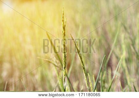 Colorful  Grain On Top Of Rice On Wayside Between Sidewalk Travel