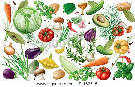 various vegetables and spices on a white semi transparent background. Vector illustration