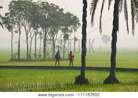 DHAKA, BANGLADESH - FEBRUARY 19, 2014: Unidentified young Bangladeshi women walk by the rice field in misty morning in Dhaka, Bangladesh.