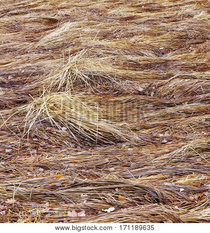 grass in autumn dry flattened vegetation backgrounds