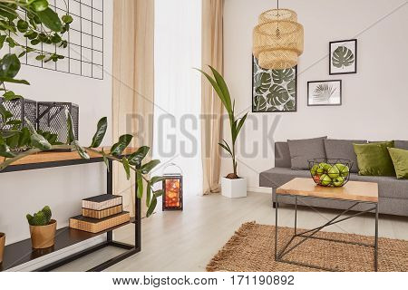 Room Interior With Plants