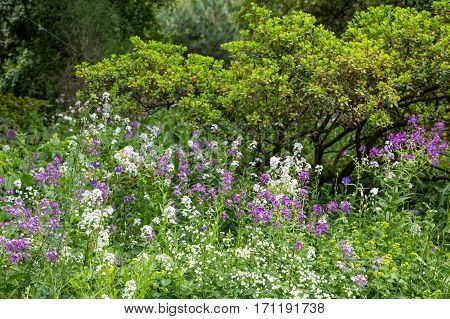 Spring Purple and White Wildflowers in Field