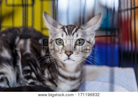 Beautiful and cute cats animal exhibition 2017