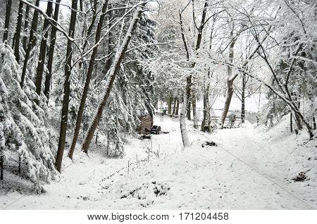 Snowbound forest and old wooden mill at frozen lake. Skansen Shevchenkivskyi Hai Lviv Ukraine.