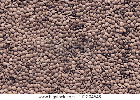 dried grains or seeds of lentil for a background and texture closeup of speckled color of brown tone