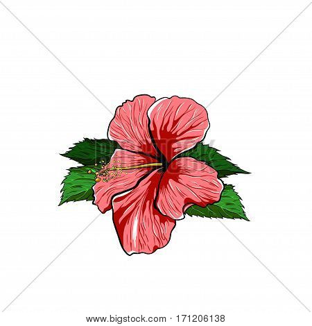 Tropical Flower hibiscus on a white Background. Vector EPS