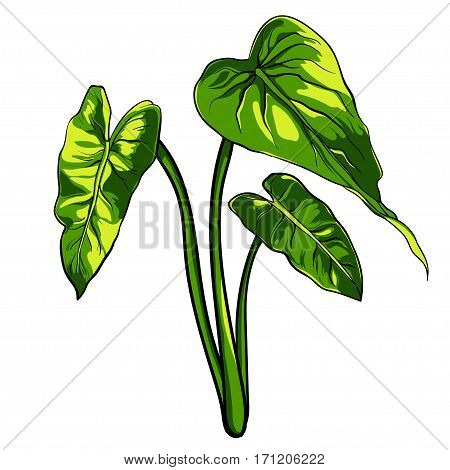 Tropical leaves on a white background vector. EPS