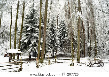 Snowbound winter forest with elements of wooden decoration - shed, cart and fence. Skansen Shevchenkivskyi Hai, Lviv Ukraine.