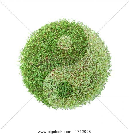 Ying-Yang Green Globe