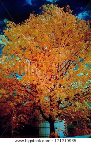 fall foliage orange color swap Infrared Park Chicago