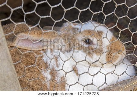 brown and white rabbit in old wooden cage