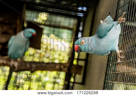 Parrot lovely bird animal and pet in cage