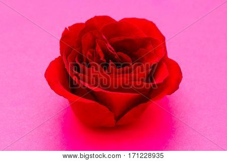 Single Simple Of Red Rose On Pink Background, Valentine Day Concept