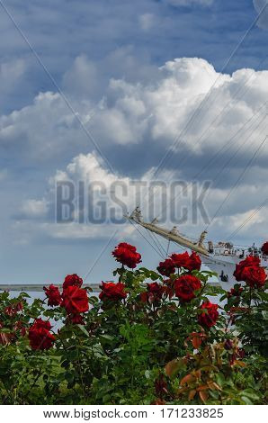 ROSES AND FRIGATE - Kosciuszko Square in Gdynia on a warm summer day