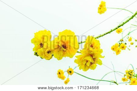 yellow flowers in my garden in morning time look beautiful