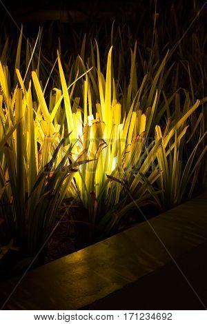 lamp light in my garden look beautiful