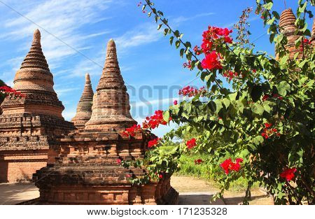 Ancient stupas in the archaeological zone and flowers of bougainvillaea, Bagan, Myanmar (Burma)