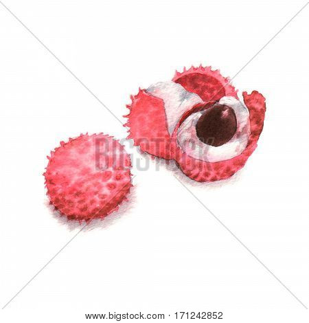 Hand drawn watercolor illustration of isolated litchi fruits on the white background