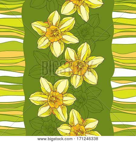 Vector seamless pattern with outline narcissus or daffodil flower in yellow on the striped green background. Floral background with narcissus for spring design in contour style.