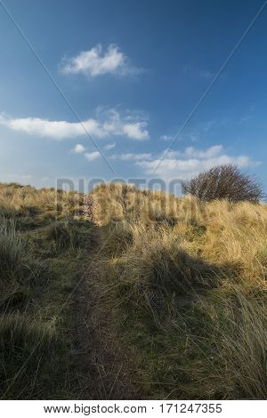 A path leads up towards the beach through rough marram grass with soft white clouds in blue sky
