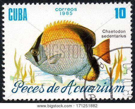 UKRAINE - CIRCA 2017: A stamp printed in Cuba shows aquarium fish Chaetodon sedentarius close-up circa 1985