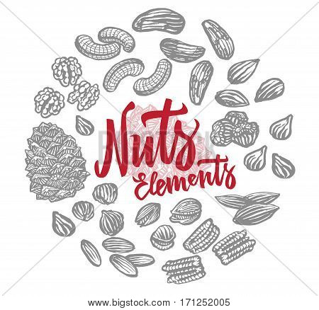 Sketch nuts elements round composition with brazil peanut almond walnut pecan hazelnut pistachio cashew sorts isolated vector illustration