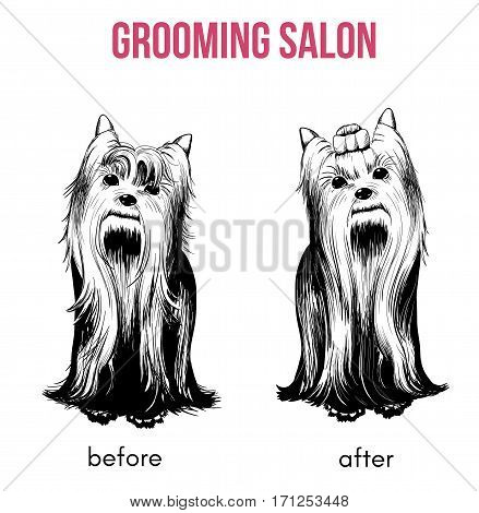 Beauty dog salon template with hand drawn yorkshire terriers before and after grooming procedures isolated vector illustration